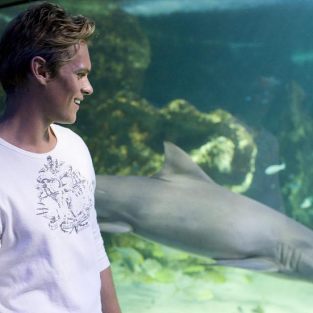 Shark aquarium image